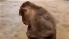 Trung Quốc: Cận cảnh mưa lũ như sóng thần tấn công khu danh lam thắng cảnh, hình ảnh chú khỉ bám thành cầu nhìn dòng nước chảy gây chú ý