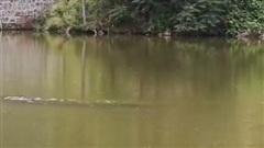 Video sinh vật kỳ bí gây xôn xao ở Trung Quốc