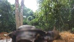 Công an vào cuộc vụ cả đàn trâu đang khoẻ mạnh bỗng chết hàng loạt ở Hà Nội