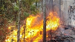 Nghệ An lại tiếp tục có cháy rừng