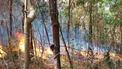 Hàng trăm người chữa cháy rừng thông ở Nghệ An