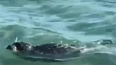 Phẫn nộ cảnh hải cẩu bị đánh đến bất tỉnh để khách du lịch tạo dáng chụp ảnh
