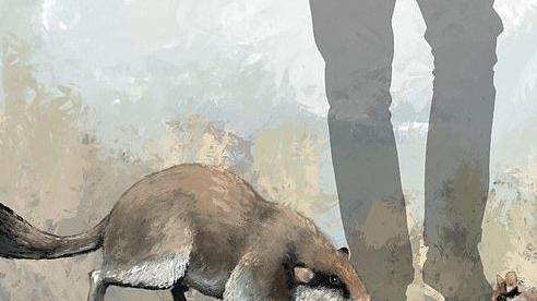 Sự thật về chuột cổ đại có hộp sọ to như mèo?