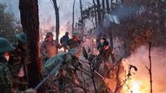 Triệu tập người phụ nữ để điều tra vụ cháy rừng ở Nghệ An
