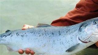 Kịch bản biến đổi khí hậu tàn khốc nhất có thể khiến 60% loài cá trên thế giới tuyệt chủng vào năm 2100?