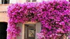 Phong thuỷ không ngờ từ những cây hồng leo, hoa giấy bám quanh nhà