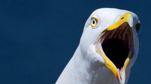Người đàn ông bị bắt vì cắn chim hải âu
