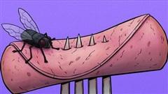 Chuyện gì thực sự xảy ra khi một con ruồi đậu lên miếng bánh của bạn? Tin tôi đi, bạn sẽ muốn vứt nó luôn đấy
