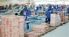 Hỗ trợ ngành gỗ tận dụng tốt ưu đãi khi xuất khẩu vào EU