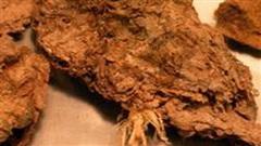 Bí mật được hé lộ từ... cục phân 14.000 năm tuổi: Cuối cùng một trong những bí ẩn lớn nhất của loài người đã được giải đáp