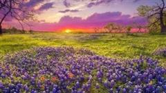 Ngất ngây, 10 cánh đồng hoa đẹp nhất thế giới