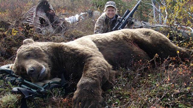 Vụ kiện độc nhất vô nhị: Gấu xám 'đòi công lý' tại tòa án liên bang, thoát chết vài giờ trước mùa săn bắn