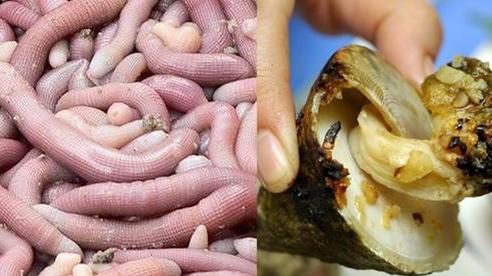 Những món hải sản ở Việt Nam tưởng quen thuộc lại được sách kỷ lục vinh danh, có loại mới nhìn thôi đã thấy 'rùng mình' không dám ăn