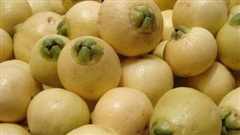 Trái lý - Loại trái cây ngọt thơm thời xưa ai cũng ghiền nhưng giờ gần như đã 'mất tăm' ở Việt Nam