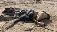 Bí ẩn xác 'quái vật' dài 4,5m dạt vào bờ, dân mạng tranh luận kịch liệt về danh tính sinh vật vì mãi vẫn không nhìn ra nó là gì