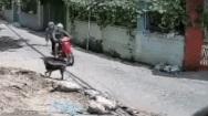 2 thanh niên táo tợn dùng dây thòng lọng trộm chó giữa ban ngày