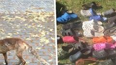 Bắt được 'thủ phạm' ăn cắp hơn 100 đôi dép khiến dân làng ngỡ ngàng