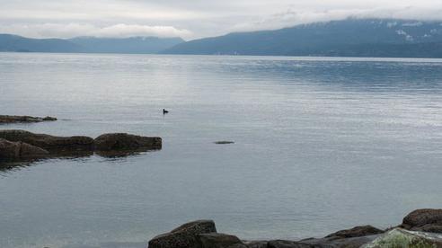 NPR: Người Canada 'giận đùng đùng' vì dân Mỹ đi thuyền vượt biên sang Canada để tránh COVID-19