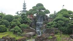 Choáng ngợp với cây sung 'Long mã hồi đầu' tiền tỷ nằm trên đỉnh núi đá quý nhân tạo của đại gia Thái Nguyên