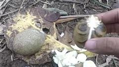 Trái cám - loại quả rất lạ chỉ ai ở miền Tây mới biết, ăn được không vẫn còn là ẩn số với nhiều người!