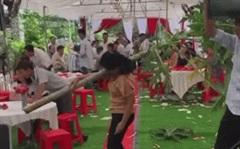 """Người phụ nữ vác cả thân cây đu đủ vào hội trường đám cưới để """"quẩy"""""""