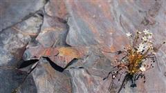 Vật chất đen dưới đáy hồ tiết lộ sự thật về một Trái Đất 'địa ngục'