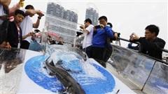 [VIDEO] 'Gấu trúc của các con sông' trước nguy cơ tuyệt chủng, Trung Quốc giải cứu ra sao?