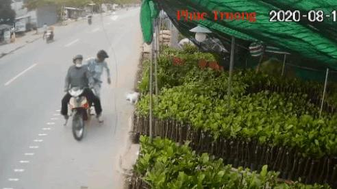 CLIP: Màn trộm chó 'hội đồng' táo tợn, 2 thanh niên dọa bắn súng điện vào người chủ