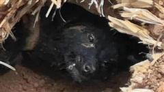 Chú chó sống sót kỳ diệu sau 37 ngày bị chôn vùi dưới đống đổ nát