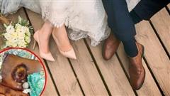Đặt bánh cưới phong cách chân chất và giản dị, cặp đôi khóc thét khi nhận về thành phẩm còn dân mạng được phen cười bò