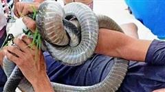 Vụ người đàn ông 'ôm' rắn hổ mang chúa 4,5kg vào bệnh viện: Người thân tiết lộ bất ngờ về 'bé Na'