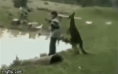"""Nam thanh niên ngã dúi dụi sau cú """"đi đường quyền"""" của chuột túi Kangaroo"""