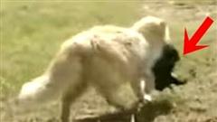 Thấy mèo cưng 'bắt trộm' đàn chó mới sinh của nhà hàng xóm đem đi đâu mất, người chủ bí mật theo dõi và phát hiện sự thật không thể ngờ