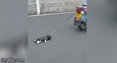 """""""Nóng mắt"""" cảnh chú chó nhỏ bị người đàn ông buộc dây vào cổ, kéo lê trên đường"""