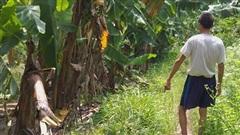 Mẹ bé gái bị gã đàn ông lạ mặt ép vào vườn chuối giở trò đồi bại: Những lời đồn khiến gia đình rất khổ sở, dự định sẽ chuyển trường cho con