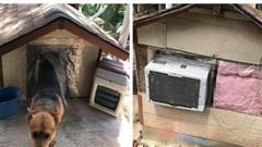 Chú chó sinh ra ở vạch đích: Chuồng 'biệt phủ' có điều hòa, mái cách nhiệt, sàn ngói mát mẻ quanh năm