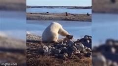 """Khoảnh khắc """"tan chảy"""" khi gấu bắc cực âu yếm chó nhà"""