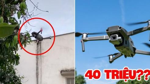 Dân mạng sửng sốt trước chàng trai mang flycam trị giá gần 40 'củ' để… hái xoài, điêu luyện đến nỗi cắt 1 phát ăn ngay!