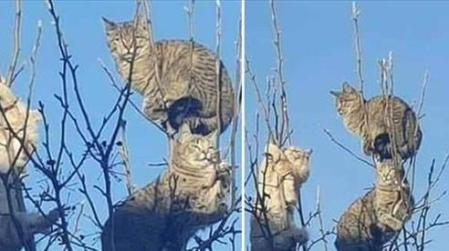 Những chú mèo được nuôi dạy bởi đám chim trời, chỉ thích tụ bạ ở ngọn cây