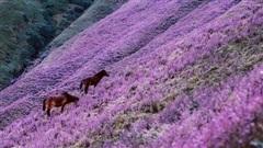 Sự thật về loài hoa Chi Pâu: nguồn gốc cái tên nghe xong chỉ muốn cười 'té ghế' nhưng quan trọng là đẹp như cảnh ở nước ngoài