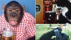 Bật cười trước chùm ảnh về những 'bợm nhậu' hài hước nhất trong thế giới động vật