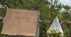 Tấm bảng 'mời ăn ổi' đang gây sốt khắp thành phố Đà Lạt vì một hành động nhỏ nhưng lại quý lắm ở tình người