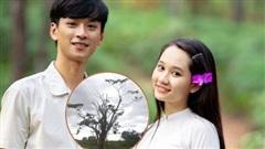 Nhìn 'cây cô đơn' từng gây sốt ở Mắt Biếc bị bão số 5 quật tơi tả, netizen Việt nức nở 'thương quá Huế ơi!'