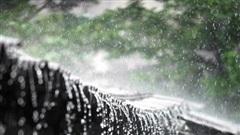 Khám phá cuộc sống ở nơi hứng mưa nhiều nhất thế giới