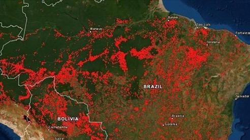 Rừng Amazon có nguy cơ bị xóa sổ?