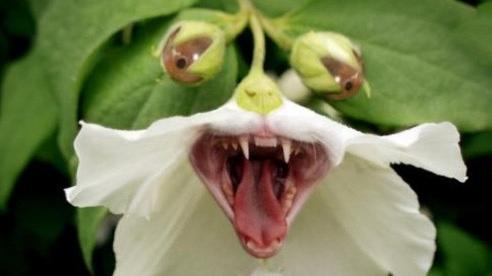 Ba loài thực vật 'sát thủ' của nhân loại, loài thứ 3 'giết chết' 7 triệu người mỗi năm!