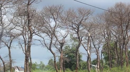 Rủ nhau phá rừng ở thành phố, 3 người đàn ông bị phạt hơn 300 triệu đồng