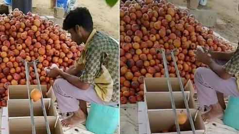 Bất ngờ trước cách chàng trai nước ngoài phân loại trái cây cực thông minh, tất cả đều nhờ… 2 thanh sắt như thế này!