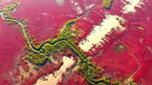 Cận cảnh 'sân bay quốc tế' của hơn 6 triệu con chim tại vùng đất nơi sông Hoàng Hà đổ ra biển