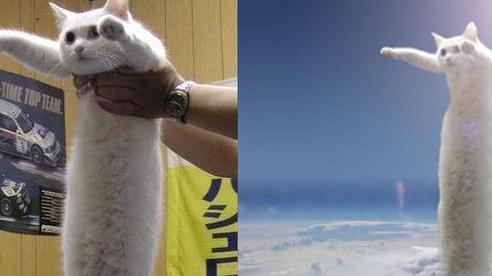 Nobiko - chú mèo huyền thoại Internet với bức ảnh meme 'Con mèo dài ngoằng' qua đời ở tuổi 18